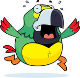 Cartoon Parrot Panic Royalty Free Stock Photography