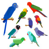 Cartoon parrots collection. Parrot wild animal birds set. Tropical feather zoo birds and tropical fauna macaw flying ara Stock Photos