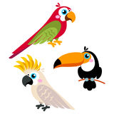 Cartoon parrots set and parrots wild animal birds isolated on white background Stock Photo
