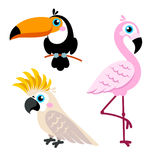 Cartoon parrots set and parrots wild animal birds isolated on white background. Stock Image
