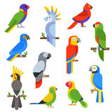 Cartoon parrots set and parrots wild animal birds vector illustration Royalty Free Stock Photography