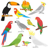 Cartoon parrots set  Royalty Free Stock Images