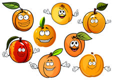Cartoon peaches, nectarines and apricots fruits Stock Image