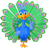Cartoon peacock Stock Images