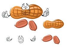 Cartoon peanut in shell with kernels Royalty Free Stock Photography