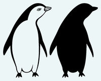 Cartoon penguin Royalty Free Stock Image