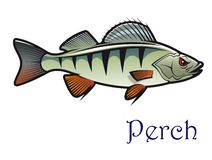 Cartoon perch Stock Photography