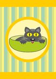 Cartoon pet in cup - baby cat Stock Images
