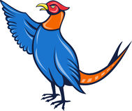 Cartoon pheasant bird pointing Stock Photo