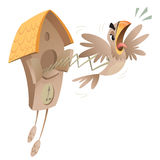 Crazy cuckoo clock. A cartoon piessed off cuckoo jumping out of the old clock announcing time Stock Photos