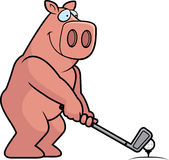 Cartoon Pig Golfing Royalty Free Stock Photo