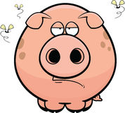 Cartoon Pig Grumpy Royalty Free Stock Images