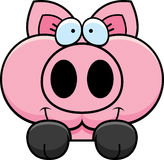 Cartoon Pig Peeking Royalty Free Stock Photo
