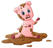 Cartoon pig play in a mud puddle Stock Image