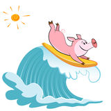 Cartoon pig Surfer Royalty Free Stock Image