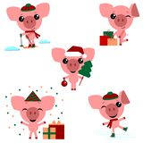 Set of chinese symbol of the 2019 year pig with different emotions. royalty free illustration