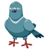 Cartoon pigeon Stock Image