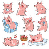 Cartoon pigs. Eight funny cartoon  pigs , isolated from a background Stock Images