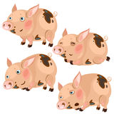 Cartoon pink pigs in four poses, vector animal Stock Image