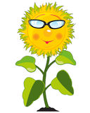 Cartoon of the plant sunflower Royalty Free Stock Image