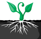 Cartoon plants sprout Stock Photography