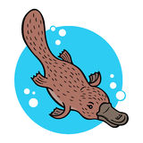 Cartoon platypus Stock Photos