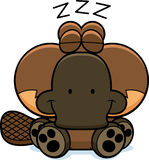 Cartoon Platypus Napping Royalty Free Stock Images