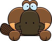 Cartoon Platypus Peeking Stock Photography