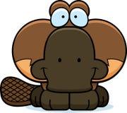 Cartoon Platypus Smiling Stock Image
