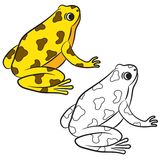 Cartoon of Poison-Dart Frog. Coloring page Royalty Free Stock Photos
