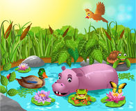 Cartoon pond with hippo and wild duck. Vector illustration of cartoon pond with hippo, turtle, frog and wild duck Royalty Free Stock Photos