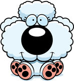 Cartoon Poodle Sitting Stock Images