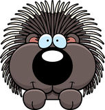 Cartoon Porcupine Peeking Stock Images