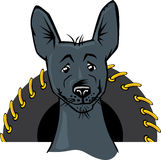 Cartoon portrait Xoloitzcuintle Mexican hairless Royalty Free Stock Image