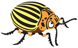 Cartoon potato beetle Stock Photography