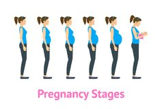 Cartoon Pregnancy Stages and Birth Set. Vector vector illustration