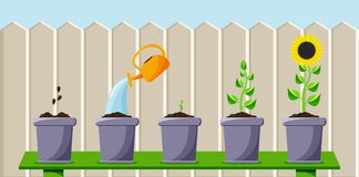 Cartoon process of planting and growing the flower. Colored flat background, vector design with shadow. Cartoon process of planting and growing the flower vector illustration