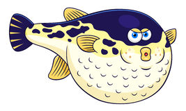 Cartoon puffer fish. Cartoon cute puffer fish  on white background Royalty Free Stock Photography