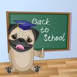 Cartoon Pug Dog wrote in classroom Royalty Free Stock Photo