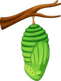 Cartoon pupa of the butterfly Stock Photo