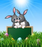 Cartoon rabbit couples holding green chalkboard in the grass Royalty Free Stock Image