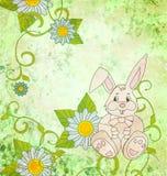 Cartoon rabbit with daisies background Stock Photos