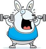Cartoon Rabbit Dumbbells Stock Photography