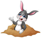 Cartoon rabbit out of holes in the ground. Illustration of  Cartoon rabbit out of holes in the ground Stock Images