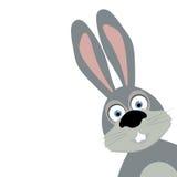 Cartoon rabbit on white background. Vector  illustration Stock Photos