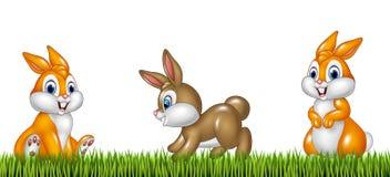 Cartoon rabbits on grass background Stock Image