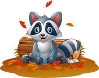 Cartoon raccoon in the autumn weather Stock Photography