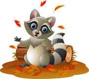 Cartoon raccoon in the autumn weather Stock Image