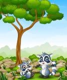 Cartoon raccoon with raccoon cub in the jungle Stock Image