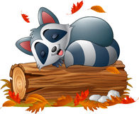 Cartoon raccoon sleeping in the autumn weather Stock Image